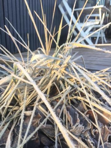 frost-sophie-ingelsten